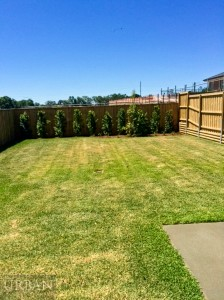 2014_November_21_Schofields_For Lease_20AnnalyseSt_Backyard